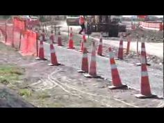 """▶ Canterbury Road Cones: Canterbury's road cone is a """"proud and noble"""" species, but its population is rapidly in decline"""