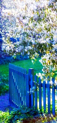 What You Can Do To Improve Your Landscaping using Garden Arbor Everyone that owns a home wants to take pride in it. Garden Entrance, Garden Arbor, Garden Gates, Blue Garden, Colorful Garden, Dream Garden, Blue Fence, Backyard, Patio