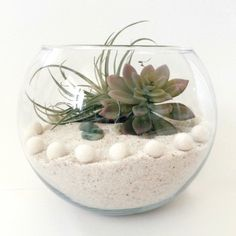 Make a gorgeous Summer terrarium with no maintenance required ;)
