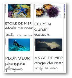Cartes de vocabulaire sur le thème de la mer - Les docs dEstelle