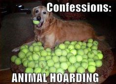 The ultimate dog hoarder & ball crazy dog!