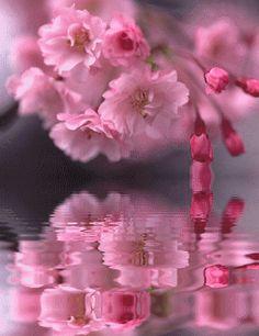 Fleurs reflet.