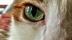 Eye of the Tiger at Home