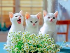 Cat pictures (58 pictures)