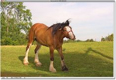 A photo of a horse. Image © 2009 Steve Patterson.