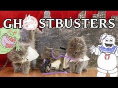 Celebrate Caturday With This Kitten Remake of Ghostbusters