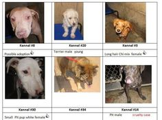 Lots of humans love them just not the human who owned them :( All these pups are in need of rescue! If you are interested in adopting please Contact Us @ 432.816.5756 Rescue Group & Lost N Found Pets of Howard County.