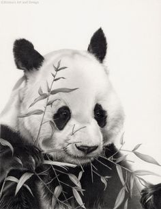 Panda dibujo montado en la impresión del por EmmasArtandDesign