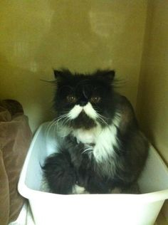 "Mr. Moustache says: ""I do say, whats the meaning of this intrusion?"""