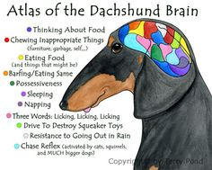 This is all true. Especially the drive to destroy squeaker toys. #dachshund