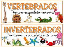 Foto: vertebrados e invertebrados