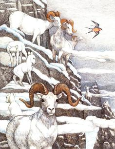 Susan Jeffers' Illustrations for 'Thumbelina' - Book Artists and Their Illustrations - Quora Children's Book Illustration, Botanical Illustration, Book Illustrations, Susan Jeffers, Animal Habitats, Animals Images, Beautiful Artwork, Fairy Tales, Drawings