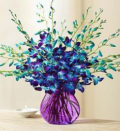 Ocean Breeze Orchids - Someone send these to me... sigh. </3