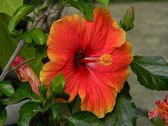 gradinareasa Spaces, Plants, Plant, Planets