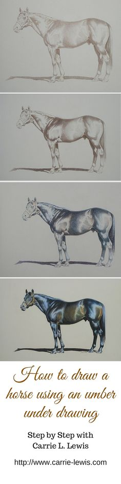 Learn how to draw this horse--or any horse--with colored pencils by using the umber drawing method. Colored pencil artist Carrie L. Lewis walks you through the process in this free, step-by-step demonstration. http://www.carrie-lewis.com/demonstrations/salt-lake-in-colored-pencil-classical-method/