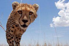 """Fotos de vida animal de la savana africana capturadas desde una perspectiva \""""íntima\"""""""