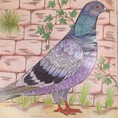 Animal Kingdom Pigeon Millie Marotta