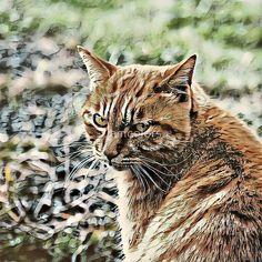 Toony Cat Cherub, Stickers, Cats, Animals, Cinch Bag, Pictures, Gatos, Animales, Animaux