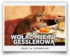 Best Memes, Funny Memes, Jokes, Funny Cats, Funny Animals, Cute Animals, Animal Pictures, Funny Pictures, Russian Humor
