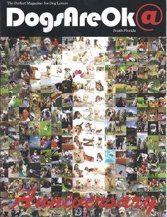MEDIA   DogForce1 – Richard Heinz – Miami Dog Trainer. Home of the Miami Dog Whisperer