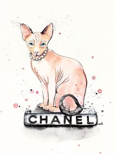"""""""They Call Me Coco""""  #sphinx #chanel #sphynx"""