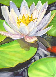White Water Lily Painting by Catherine G McElroy - White Water Lily Fine Art Prints and Posters for Sale