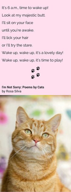 "Poem from ""I'm Not Sorry: Poems by Cats"", a funny cat poems book"