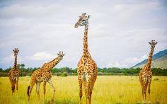 Vé máy bay đi Nairobi Kenya giá rẻ cập nhập liên tục Beetours