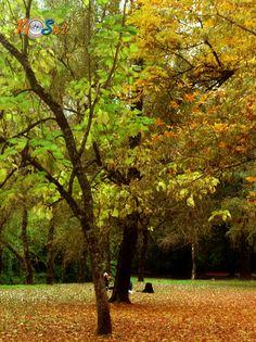 Jardín Botánico, Valdivia, XIV Región de Los Ríos, Chile.