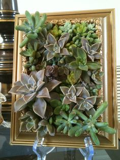 Gold Frame and succulents. Just maybe name of tables / table number incorporated ? Succulent Frame, Vertical Succulent Gardens, Succulents Garden, Garden Plants, More Curves, Love Garden, Old Frames, Garden Landscaping, Gardening Tips