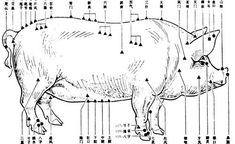 Pig acupuncture chart. Really? Who is going to stick pins in a pig?