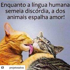 VAMOS APRENDER COM NOSSOS ANJINHOS! ❤❤ #paidegatos #maedegato #filhode4patas #gatos #maedecachorro #paidecachorro #cachorro #cachorroterapia #cachorroetudodebom #amorincondicional #amor #amoanimais