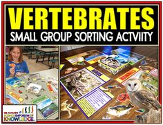 If you have a backbone, this educational resource is for you. This fun-filled small group activity will instantly engage your students as they learn about the 5 different types of vertebrates, their traits, & what environment suites each. Sorting Games, Sorting Activities, Activity Games, Types Of Vertebrates, Animal Classification, Small Group Activities, Science Education, Small Groups, Students