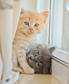 These pretty cats will make you amazed. Cats are wonderful creatures. Cute Cats And Kittens, I Love Cats, Crazy Cats, Kittens Cutest, Kittens Playing, Pretty Cats, Beautiful Cats, Animals Beautiful, Baby Animals