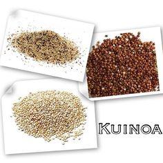 KUİNOA' YI SOFRANIZDAN EKSİK ETMEYİN !  Tam tahıllarda genelde hayvanlarda bulunan amino asitler yok ya da yok denecek kadar azdır. Kinoa ise adeta hayvansal gıda kaynakları kadar değerli tek tahıl. Süt, yoğurt, tavuk, et gibi hayvansal ürünlerde bulunan amino asitler, ayrıca ete yakın hatta filizlendirilmişse etten bile daha kıymetli protein emilim gücü var. Buğdaydan iki misli, pirinçten de çok daha fazla tahıl içeriyor. Susam ailesinden gelen kinoa aynı zamanda bir magnezyum kaynağı…