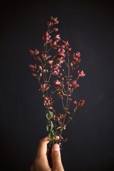 black wall. studio. flowers. editorial.