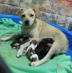 ***RESCUE ONLY*** GREENVILLE, KY Muhlenberg County Humane Society  mchs02@att.net (270) 338-6940 https://www.facebook.com/photo.php?fbid=335642733250468&set=np.293048490.555816101&type=1&ref=notif&notif_t=notify_me