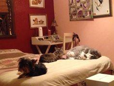 Botox Gato y Chulin tan ricamente