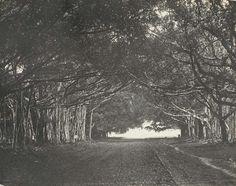 Buitenzorg, Bogor 1888 (taken from Indonesia Tempo Doeloe)