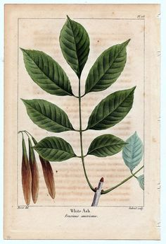 Botanical prints are one of the most classic pieces of artwork. Bringing bits of nature into your home like this adds that warmth and earthiness that we all crave this time of year. Vintage Botanical