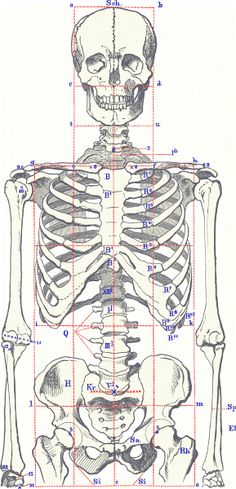 Human Body Skeleton Drawing