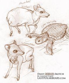 15 Best Mouse deer images | Mouse deer, Deer, Mammals