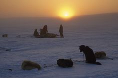 Dogs sledding expedition on Cape Bathurst at Sunset, near Arctic Ocean in Northwest Territories_ Canada