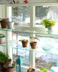 The Urban Gardener: Indoor Window Garden Inspiration | Indoor window on kitchen window seating ideas, kitchen window decor ideas, kitchen window backsplash ideas, kitchen window shelf ideas, kitchen window casing ideas, kitchen window lighting ideas, kitchen window cabinet ideas,