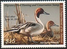 Federal Duck Stamp RW75 2008-09 Northern Pintails - TR Duck Stamps, Etc.