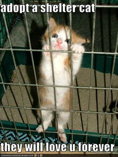 Adopt a shelter cat. this literally happened to me with the first shelter cat I adopted - he climbed up the bars and reached out a tiny paw while mewing like crazy. I had to pick him :) Crazy Cat Lady, Crazy Cats, Cute Baby Animals, Funny Animals, Animal Memes, Smart Animals, Animal Quotes, Animal Shelter, Animal Rescue
