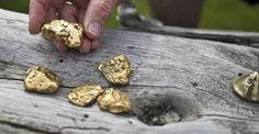 goudkoorts