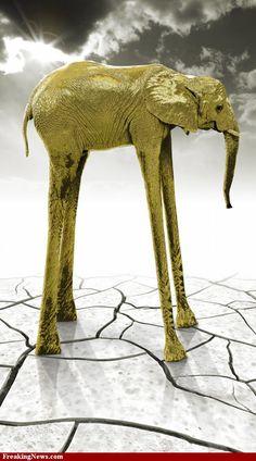 Dali elephant for my Bella....