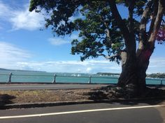   Mission Bay, Auckland, NZ