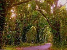 The Kapoho Kalapana road